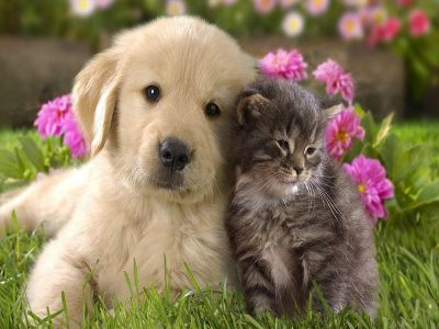 Holistic medicine for cats and dogs